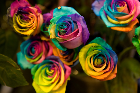 Rainbow roses are for real out loud93 for Pictures of rainbow roses